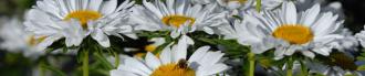 Blumengrüße aus der Hirschau