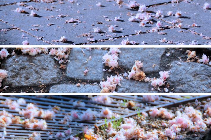 Kastanienblüten