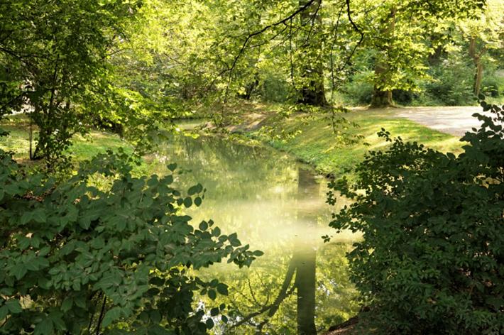 Sommer im Park