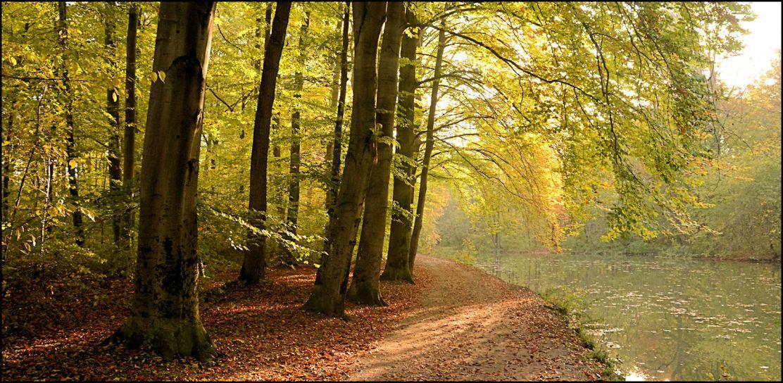 Goldener Oktober am Entenfallweiher im Englischen Garten